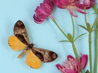 Spring Garden Sara Newman Design Произведения искусстваКартины и принты