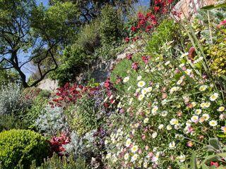 JUNGLE ART Jardins ecléticos