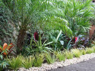 Jardín de Sombra Estudio Nicolas Pierry: Diseño en Arquitectura de Paisajes & Jardines Jardines tropicales