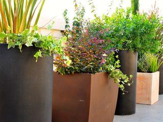 ésverd - jardineria & paisatgisme Balconies, verandas & terraces Plants & flowers