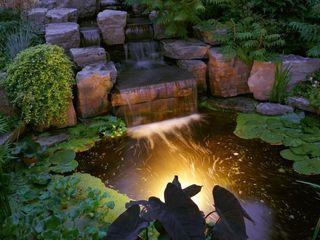 italiagiardini Tropical style garden