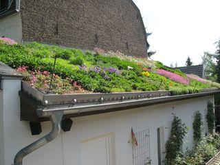 Intensiv Dachbegrünung Bauernhof Nagelschmitz Garten- und Landschaftsgestaltung GmbH Mediterrane Häuser