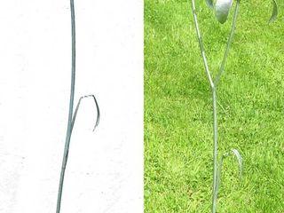 Iris Iron Vein Garden Plants & flowers