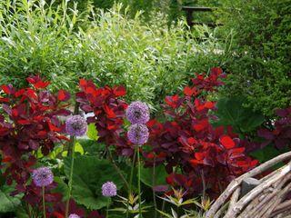 Natuur- en mensvriendelijke tuin in Lisse Ontwerpstudio Angela's Tuinen Moderne tuinen