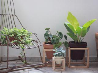 Pomelo TuinPlanten & bloemen