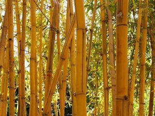 Bamboo Best4hedging Asian style garden