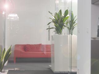 Pflanzen - Hydro Haedi-Flor Meisterbetrieb Raumbegrünung Weiß