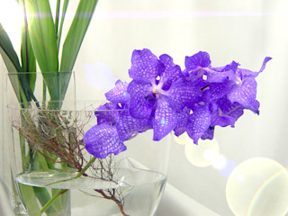Exklusive frische Blumen Haedi-Flor Meisterbetrieb HaushaltAccessoires und Dekoration Lila/Violett