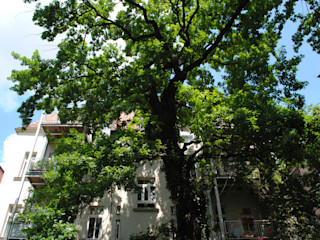 Baumpflege Haedi-Flor Meisterbetrieb