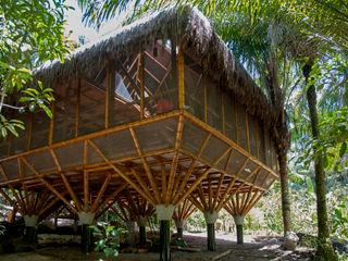 IR arquitectura Quartos tropicais Bambu Acabamento em madeira
