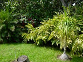 Tropical America landscaping Сад в стиле модерн