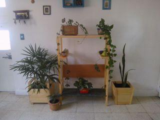 Departamento Seis HouseholdPlants & accessories Wood