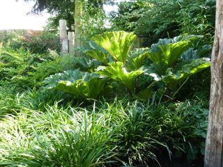 Koert Gardening Tropical style garden