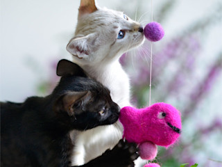 stylecats® HouseholdPet accessories