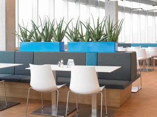 BAUMHAUS GmbH Raumbegrünung Pflanzenpflege Espaces de bureaux modernes Synthétique