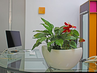 BAUMHAUS GmbH Raumbegrünung Pflanzenpflege Espaces de bureaux modernes