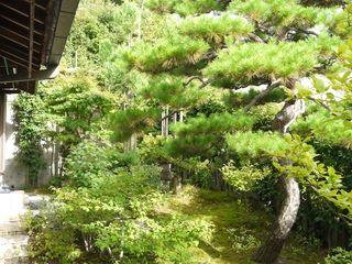 Sakurayama-Architect-Design Azjatycki ogród