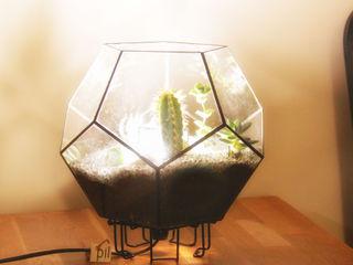 Terrarium Lighting Pil Tasarım Mimarlik + Peyzaj Mimarligi + Ic Mimarlik CasaPlantas e acessórios Vidro Transparente