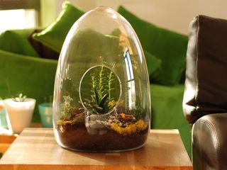 TERRARIUM Pil Tasarım Mimarlik + Peyzaj Mimarligi + Ic Mimarlik JardimPlantas e flores Vidro Verde