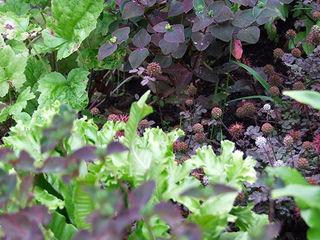 titre Fertiles JardinFleurs & Plantes