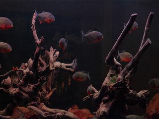 Carnivore Aquarium Architecture Gastronomy
