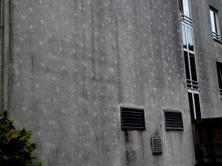 Mit der Dämmung kommen die Algen Schneider Fassadenreinigung