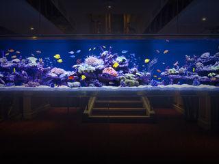 Grosvenor Aquarium Architecture Bars & clubs