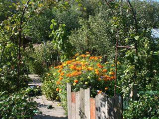 Eetbare tuin Carla Wilhelm Landelijke tuinen