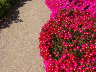 Jardim de suculentas Atelier Jardins do Sul Jardins mediterrâneos