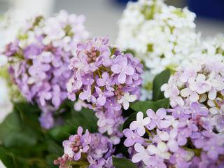 Escala Concept Store Garden Plants & flowers