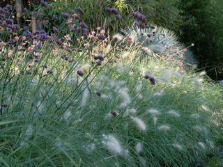 Inspirations Anthemis Bureau d'Etude Paysage Jardin moderne