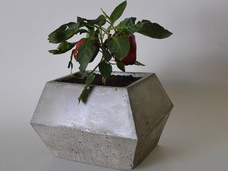 BODOQUE - Diseño en Concreto Interior landscaping Grey