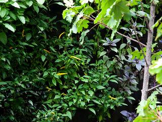 CASA COLINA DEL MIRADOR VERDE360 Jardines de estilo moderno