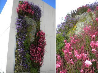 L&S arquitectos Eclectic style garden