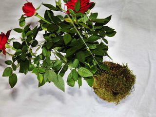 Aida Lopez Paisajista Balconies, verandas & terraces Plants & flowers