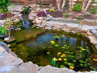 Koi Havuzu Bio Göl Havuz (Biyolojik Gölet ve Havuz Yapısalları) Kırsal Bahçe