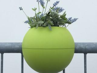 studio michael hilgers Balconies, verandas & terracesPlants & flowers