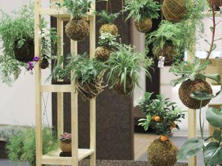 fiu jardins, lda. GartenPflanzen und Blumen