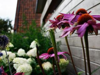 KLAP tuin- en landschapsarchitectuur Country style garden