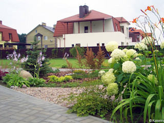 Aster Garden СадРослини та квіти
