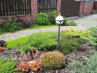 Aster Garden СадОсвітлення