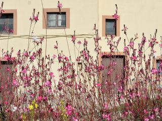 jardinista Mediterranean style garden