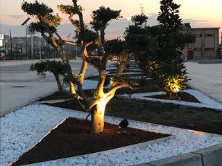 AKSA AKRİLİK KİMYA SANAYİ A.Ş Projelendirme ve Uygulama & Landscaping Project and Installation konseptDE Peyzaj Fidancılık Tic. Ltd. Şti. Ofis Alanları