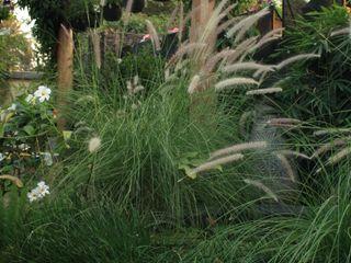 Artistic Design Works Jardin avant