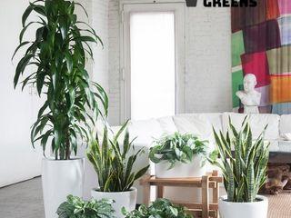 Glastres Greens Asiatischer Garten