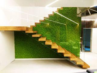 GREEN Project Paisajismo de interiores Verde