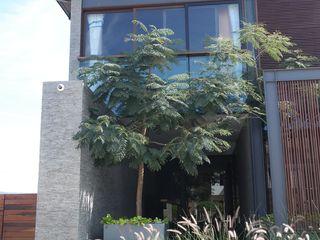 Verde Lavanda Палісадник Дерево Зелений