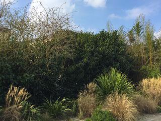 Trente nuances de verts... Paradeisos conception de jardin Jardin tropical
