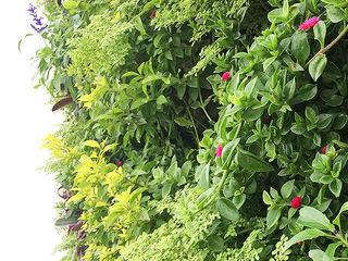 Quetzal Jardines Minimalist style garden