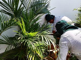 Quetzal Jardines Tropical style garden